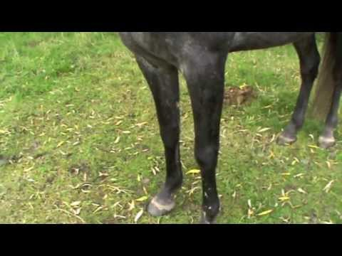 Signs of discomfort on a Horse body language and emotions