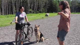Bicycle Training for Dogs, on leash and off leash, Solid K9 Training