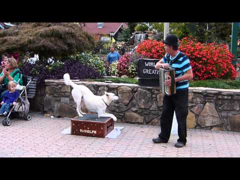 Oktoberfest Helen, Ga - Street Performer & His Dog - Amazing!