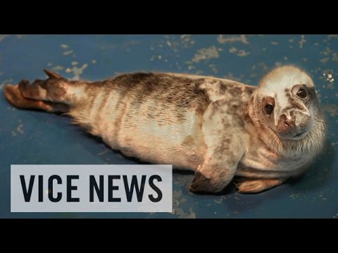VICE News Daily: Beyond The Headlines - December 30, 2014