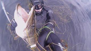 В видео ролике представлены лучшие моменты из нескольких охот, многие думают, что под водой как в магазине - пришел, выбрал и домой - но  это не так,