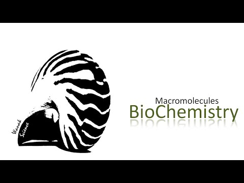 macromolecules lab bio 1 lab 53 lab 4 – macromolecules objectives 1 determine the molecular structures and properties of key chemical groups 2 build models of several amino acids and.