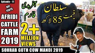 COW MANDI SOHRAB GOTH 2019 KARACHI | AFRIDI Cattle Farm | VIP TENTS | Episode – 11  in URDU HINDI