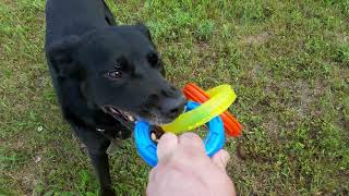 NERF DOG TUFF TUG TOY - TUG OF WAR WITH SAM