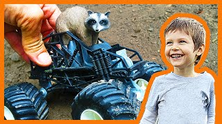 Raccoon Rides a Toy Monster truck