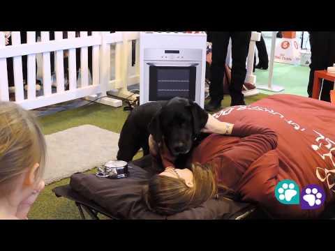 Demonstração de deficientes auditivos sendo acordados por seus cães guia