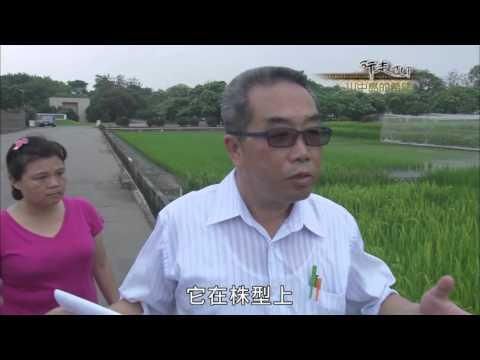 台灣-行走TIT-EP 01 川中島的希望