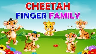 Cheetah Finger Family Collection