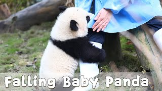 The Growing-up Diary Of Panda Po's Elder Baby Episode 6 | iPanda