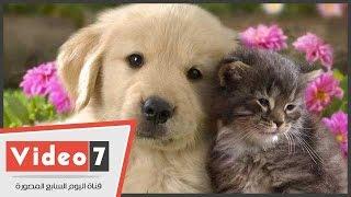 بالفيديو.. طبيب بيطرى يكشف أسباب إقبال المصريين على تربية الكلاب والقطط