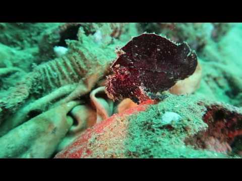 download lagu Bunaken Island Pulau Bunaken Wisata Ke Bunaken gratis
