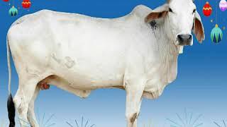 Types of cow/animal science/ ayush kushwah