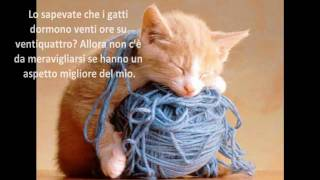 Gatti:animali Divertenti.Aforismi E Foto