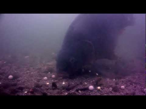 Exclusive Underwater Reaction Footage to the Goo...