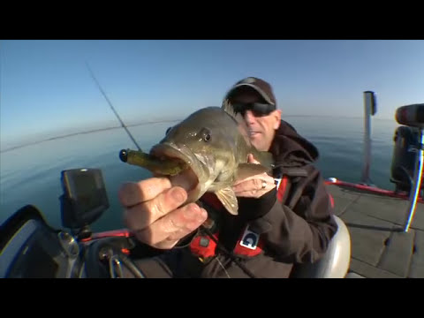 Strike King Swim'n Caffeine Shad Smallmouth Bass - Facts of Fishing THE SHOW