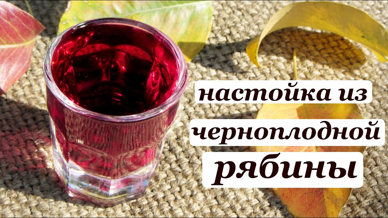 Как приготовить наливку из черноплодной рябины в домашних условиях 174