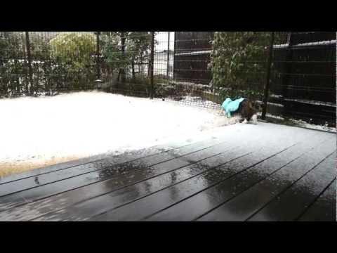 雪とねこ。-Snow and Maru.
