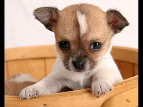 Dog Breeds That Are Small And Don