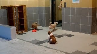Puppies Know How To Take Elevator Home