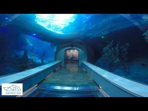 Detroit Zoo | Polk Penguin Conservation Center - Go Pro Tour
