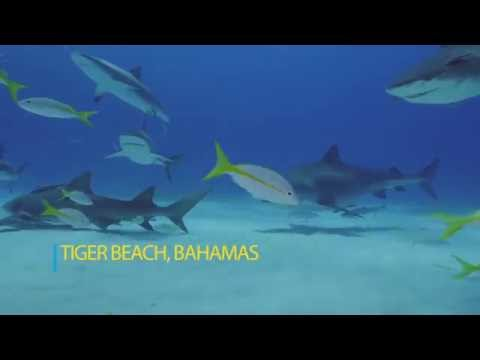 Emma the Tiger Shark - This is Your Ocean Sharks - Part 2