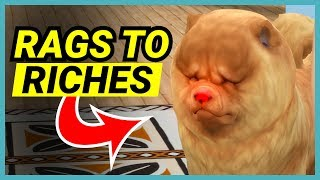 The red nosed Chow Chow - 🌴 Rags to Riches (Part 19)