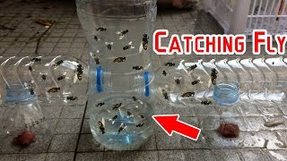 Catch Hundreds of House Flies In Days With A Homemade Trap | Creative Channel