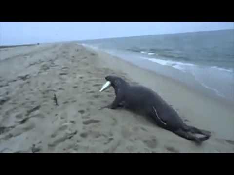 Este león marino roba el pescado a este pescador