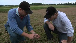 How cranberries are planted with Habelman Cranberries
