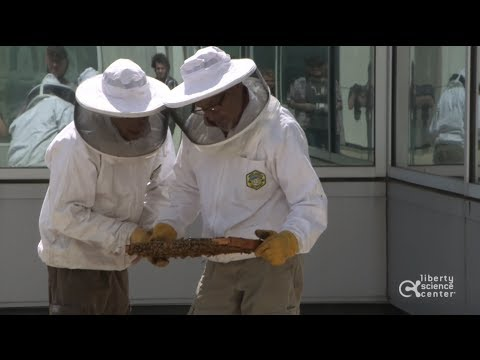 Honey Bee Installation at Liberty Science Center