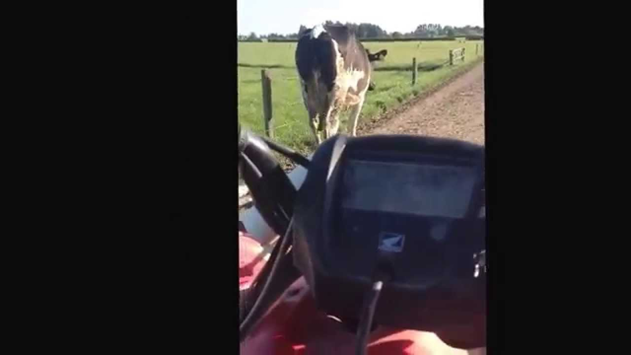 Dairy Farming in New Zealand Dairy Farming in New Zealand