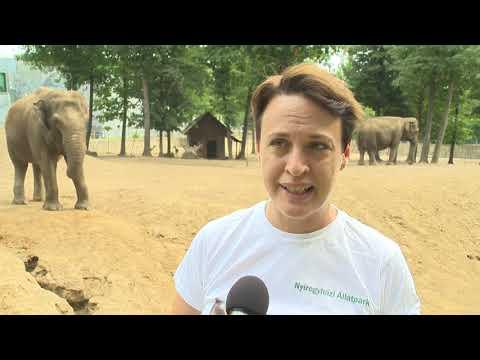 Elefántok világnapja - Kölcsey Tv