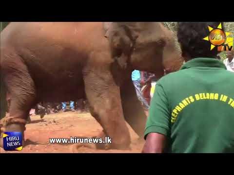 2 wild elephants cau|eng