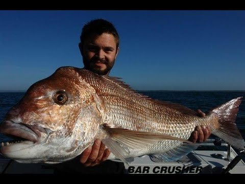 BIG SNAPPER BIGGER GUMMY - YouFishTV Australia
