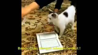 Download Lagu SUBHANALLAH !!!  Kucing ini Tidak Mau Menginjak Al Quran -  Bukti Kesucian Al Quran Gratis STAFABAND