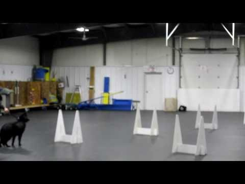 Frenzyed Fliers Beginner Flyball Class Youngstown All Breed Training Club ...