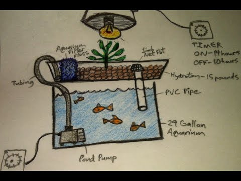 How To Build A Small Aquaponics System