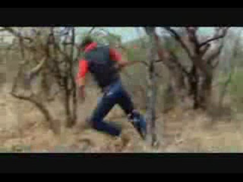 FUGINDO DO LEÃO - RUNNING OF LION ATTACK Music Videos
