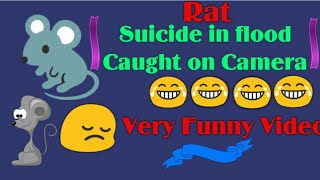 Funny Rat Suicide In Flood