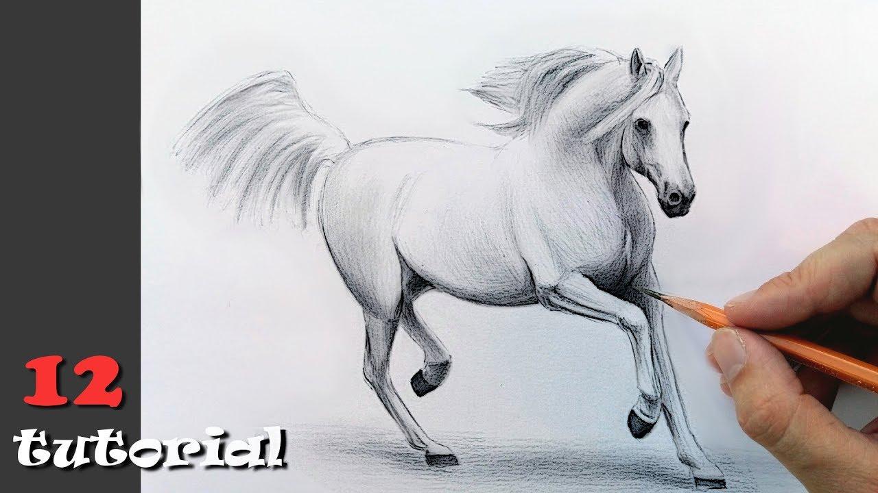 Как нарисовать лошадь карандаш видео