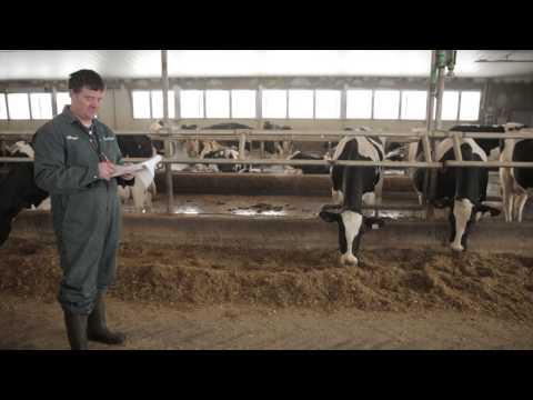 Dairy farming brings value in Alberta