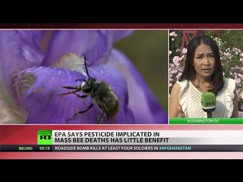 EPA report blames industry for mass bee die-off