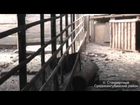 АЧС: чиновники бездействуют, животные гибнут - ИА REGNUM