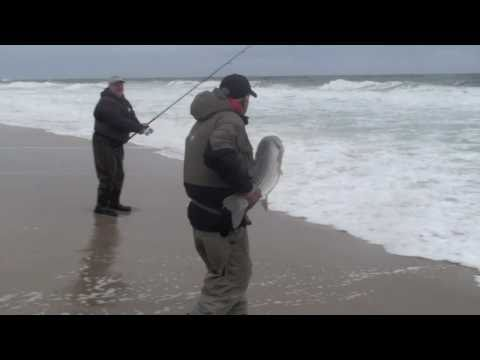 Big Striped Bass Caught in the Jersey Shore Surf