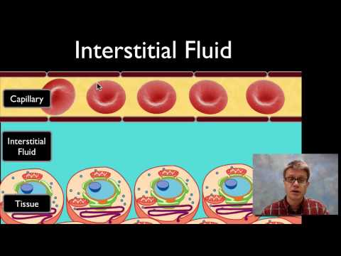 Interstitial Fluid