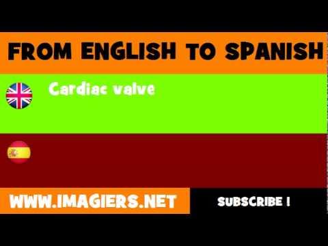 ESPAÑOL = INGLÉS = Válvulas cardíacas