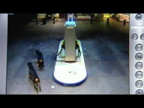 Dos personas han sufrido heridas, al parecer de carácter no grave, tras ser atacadas por tres perros rottweiler en una gasolinera del polígono Carrús, en Elc...