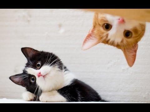 FUNNY VIDEOS: Funny Cats - Funny Cat Videos - Funny Animals - Funny Fails - Cats Chasing Shadows