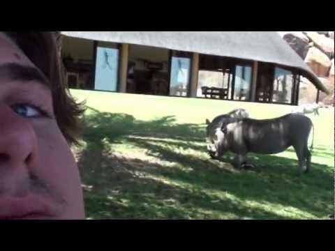 Warthog Day