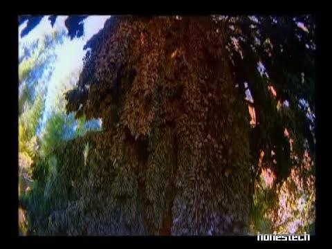 Viajes Asombrosos 1/6 - Mariposa Monarca
